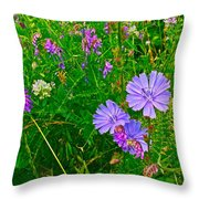 Chicory And Purple Vetch Along Rivier Du Nord Trail In Laurentians-quebec Throw Pillow