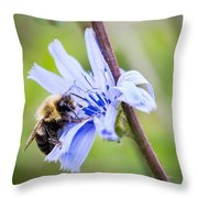 Chicory Bee Throw Pillow