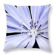 Chicory Flower Macro Throw Pillow