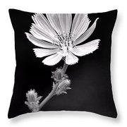 Chicory Wildflower Throw Pillow