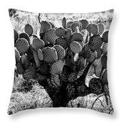 Chihuahua Desert Cactus Bw Throw Pillow