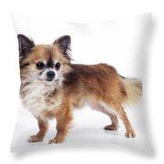 Chihuahua Dog Throw Pillow