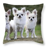 Chihuahua Dogs Throw Pillow
