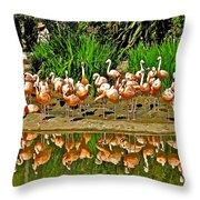 Chilean Flamingo Reflection In San Diego Zoo Safari Park In Escondido-california Throw Pillow