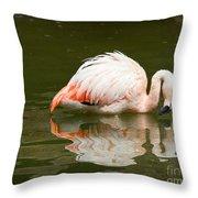Chilean Flamingo Reflection Throw Pillow