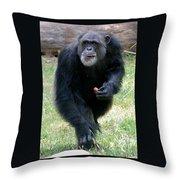 Chimpanzee-5 Throw Pillow