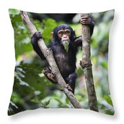 Chimpanzee Baby Eating A Leaf Tanzania Throw Pillow
