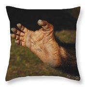 Chimpanzee Foot Throw Pillow