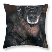 Chimpanzee Portrait Endangered Species Wildlife Rescue Throw Pillow
