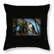 China Berry Hawk Throw Pillow