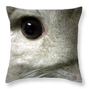 Chinchilla Face Throw Pillow