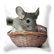 Chinchilla In A Straw Basket  Throw Pillow
