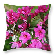 Chinese Apple Blossoms Throw Pillow