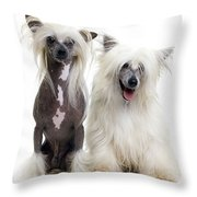 Chinese Crested Dogs Throw Pillow