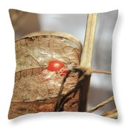 Chinese Lantern Plant - E Throw Pillow
