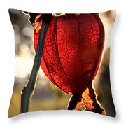 Chinese Lantern Plant - Glow Throw Pillow