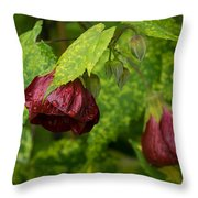Chinese Lanterns Refreshed By The Rain Throw Pillow
