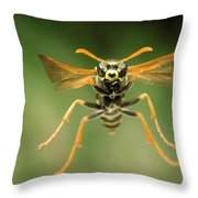 Chinese Paper Wasp Throw Pillow