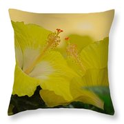 Chinese Rose Duo Throw Pillow