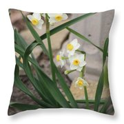 Chinese Sacred Lily Throw Pillow