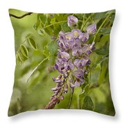 Chinese Wisteria Throw Pillow