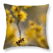 Chinese Witch Hazel Throw Pillow