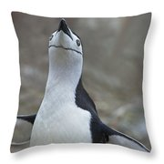 Chinstrap Madness... Throw Pillow