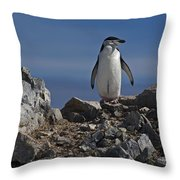 Chinstrap On The Look Out.. Throw Pillow