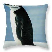 Chinstrap Penguin Throw Pillow