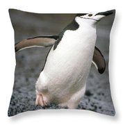 Chinstrap Penguin Deception Isl Throw Pillow