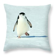 Chinstrap Penguin Running Throw Pillow