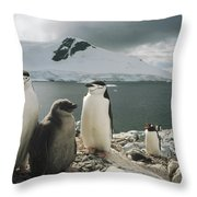 Chinstrap Penguins With Chick Paradise Throw Pillow