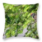 Chip Throw Pillow