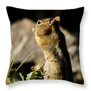 Chipmunk   #9594 Throw Pillow