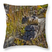 Chipmunk In Yellowstone Throw Pillow