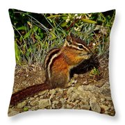 Chipmunk On Hurricane Hill Trail In Olympic National Park-wa Throw Pillow