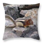 Chipmunk Tones Throw Pillow