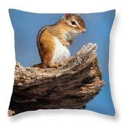 Chipmunk Sunning Throw Pillow