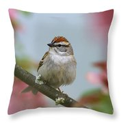 Chipping Sparrow In Blossoms Throw Pillow by Deborah Benoit