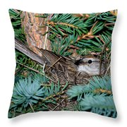 Chipping Sparrow On Nest Throw Pillow