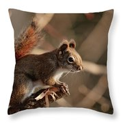 Chippy Perched Throw Pillow