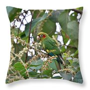 Chiriqui Conure Throw Pillow