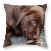 Chocolate Lab Pup Throw Pillow