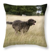 Chocolate Labradoodle Running In Field Throw Pillow