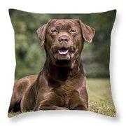 Chocolate Labrador Dog Throw Pillow