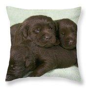 Chocolate Labrador Puppies Throw Pillow