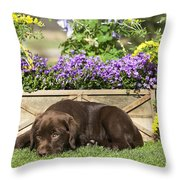 Chocolate Labrador Puppy Throw Pillow