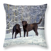 Chocolate Labrador Retrievers Throw Pillow