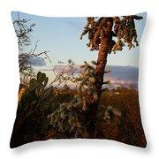 Cholla Cactus View Throw Pillow