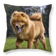 Chow Chow Dog Throw Pillow